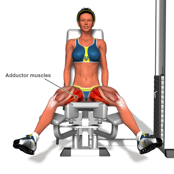 adductor exercise