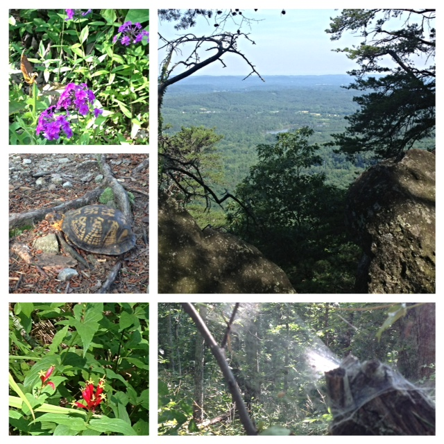 Just a preview of these awesome trails!