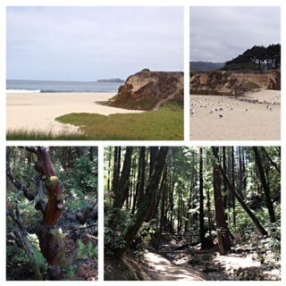 Halfmoon Bay & Huddart Park (redwood central)