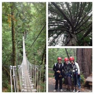 Zip lining redwoods