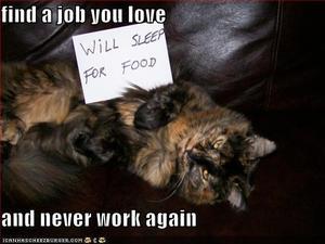 cat-will-sleep-for-food