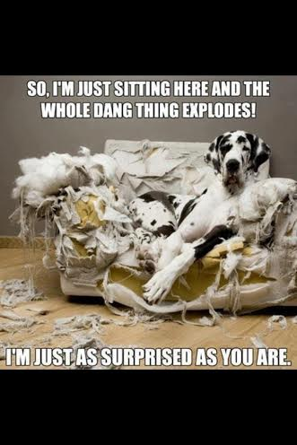 dog explosion