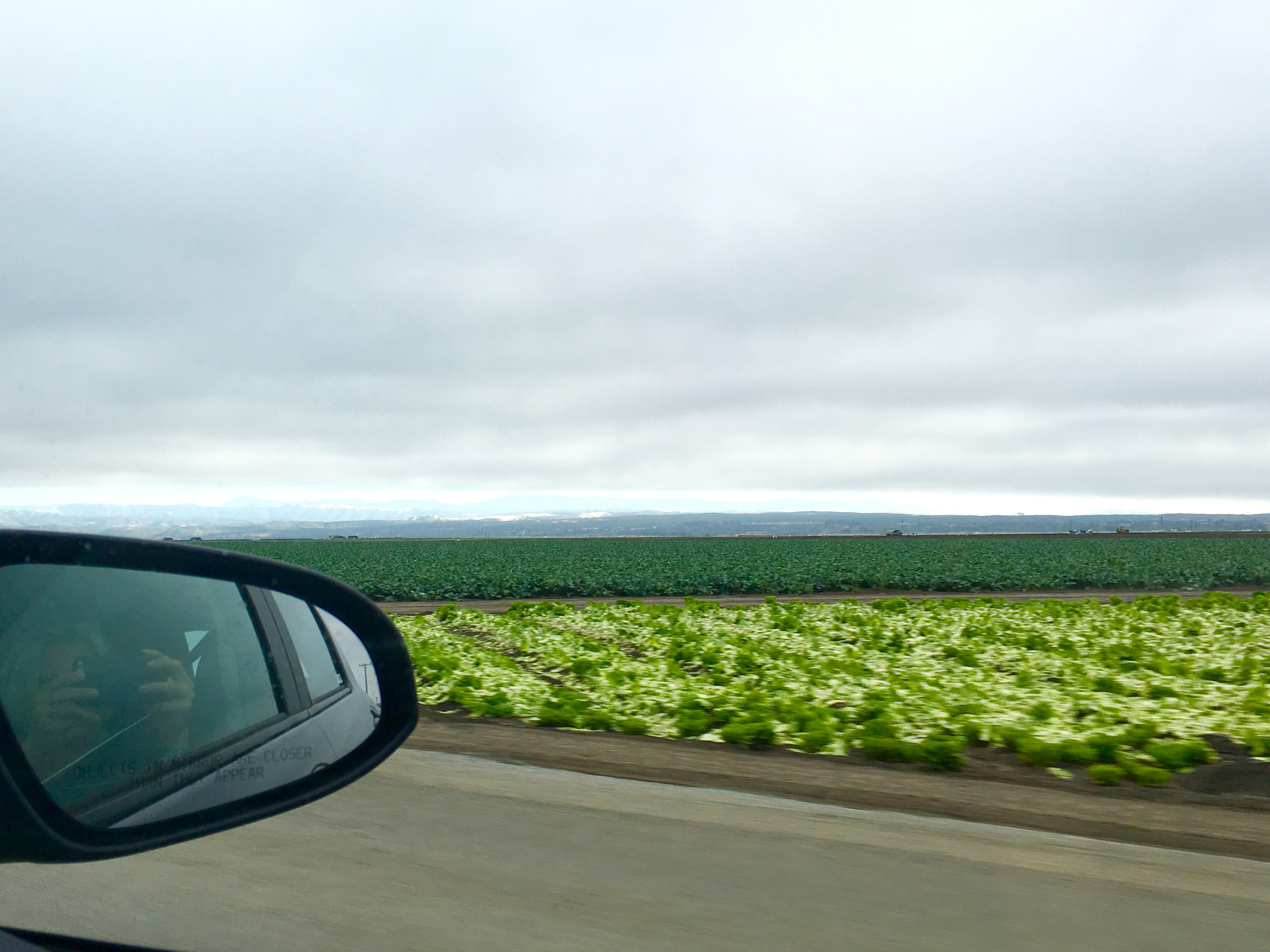 Cabbage and strawberry patches along HWY 1