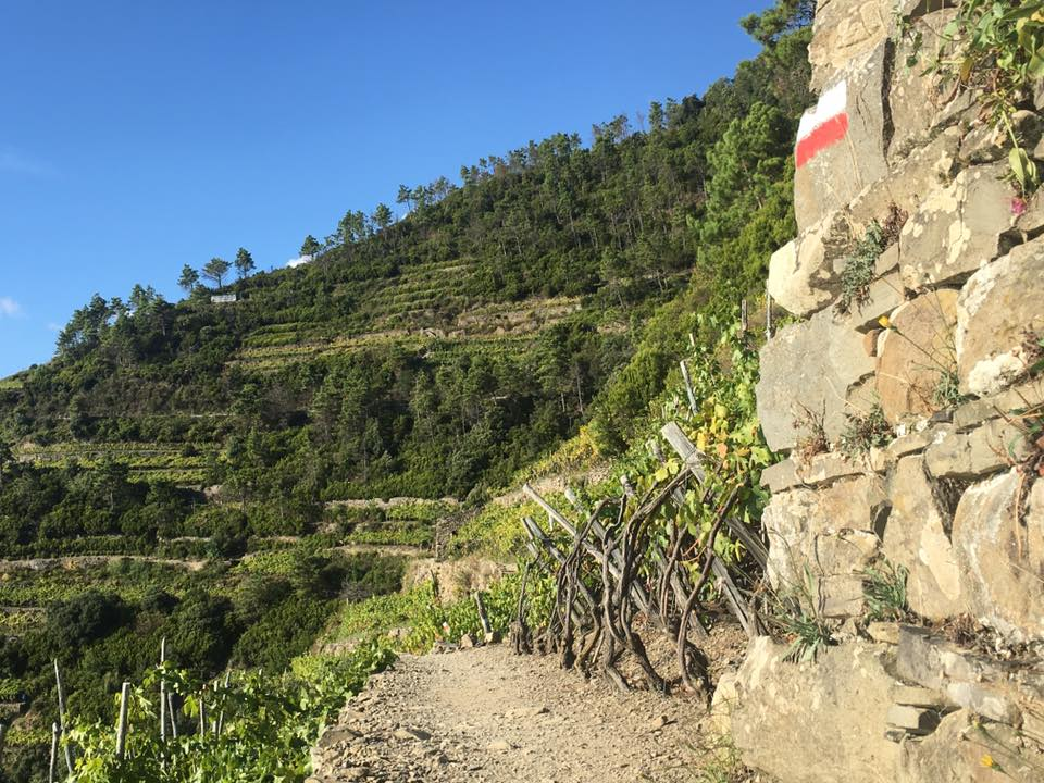 Hiking from Manarola to Corniglia